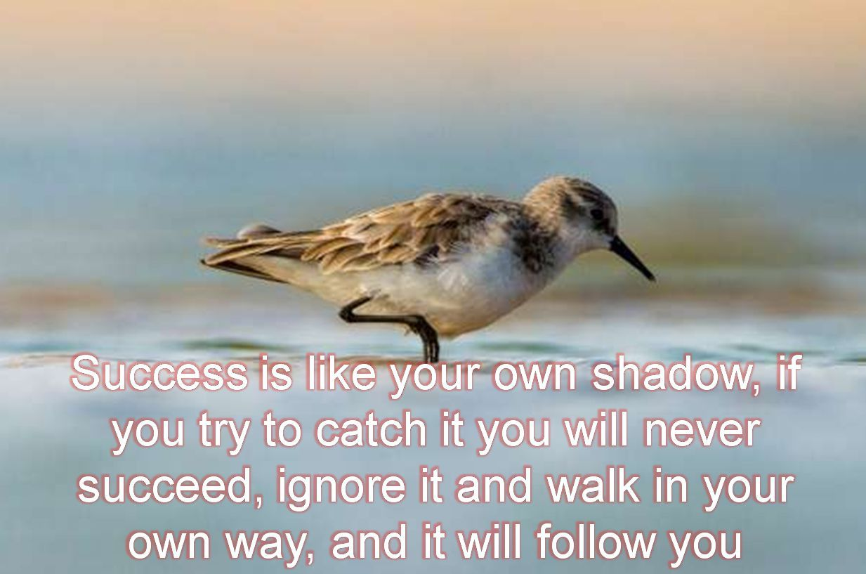 Anonymous- Success is like your own shadow, if you try to catch it you will never succeed, ignore it and walk in your own way, and it will follow you