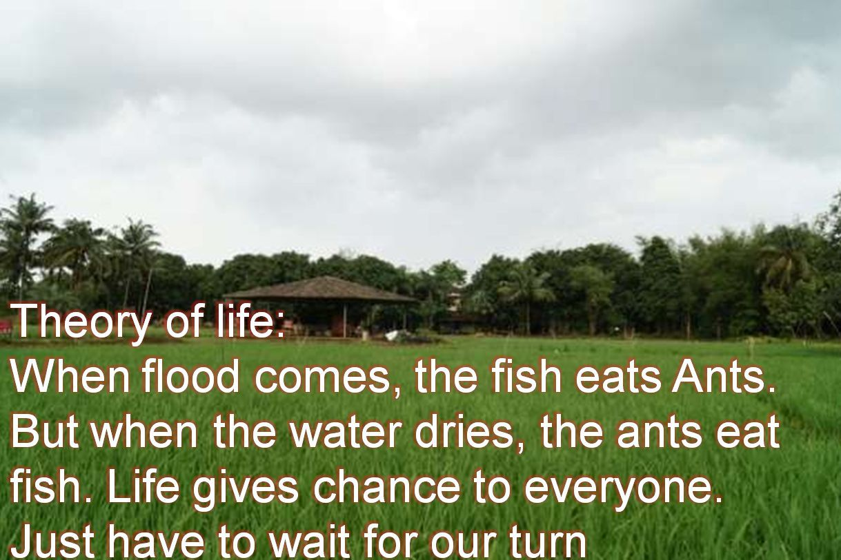 Anonymous- Theory of life: When flood comes, the fish eats Ants. But when the water dries, the ants eat fish. Life gives chance to everyone. Just have to wait for our turn