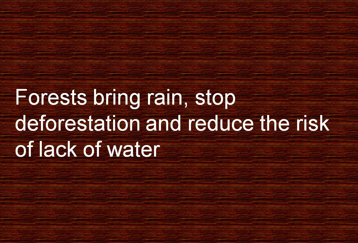Forests bring rain, stop deforestation and reduce the risk of lack of water