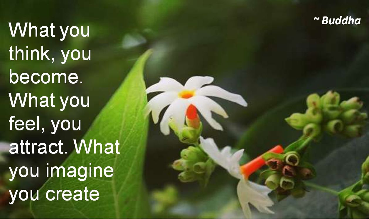Buddha- What you think, you become. What you feel, you attract. What you imagine you create