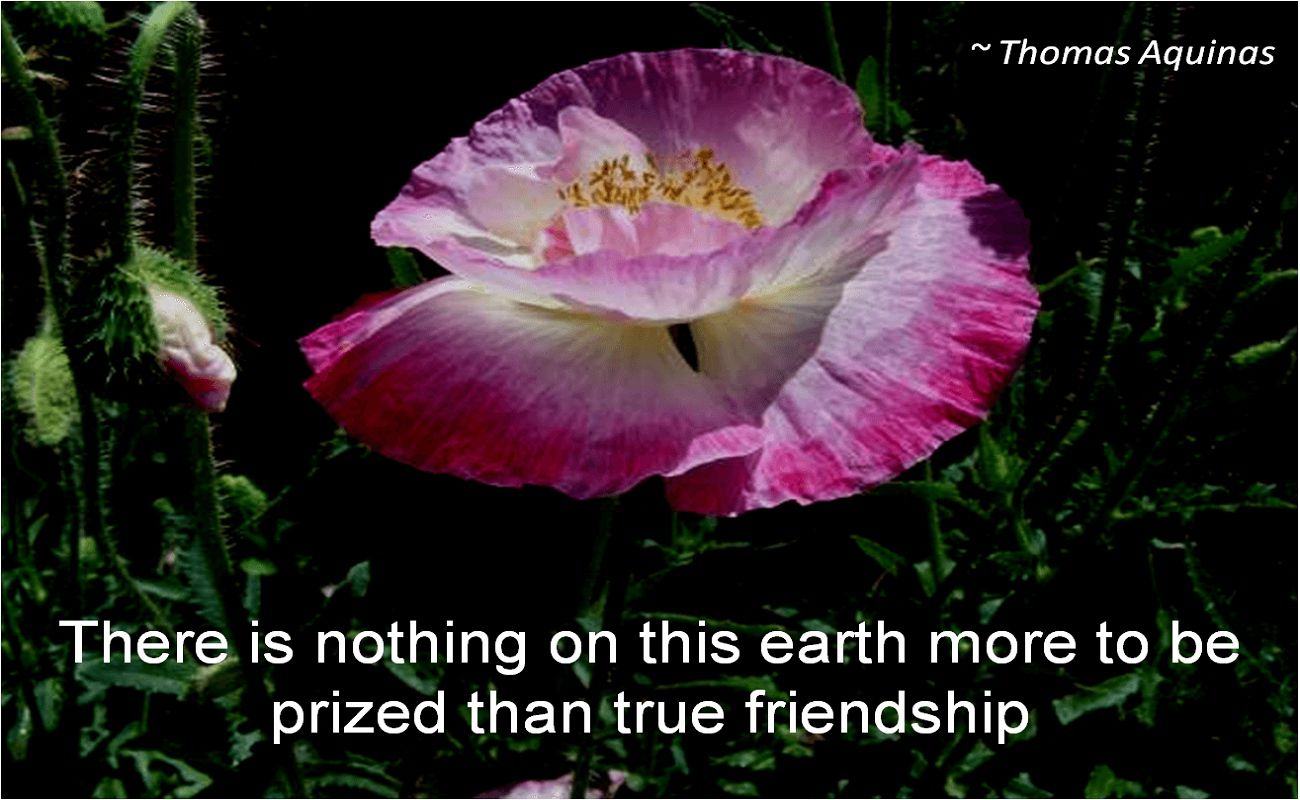 Thomas Aquinas- There is nothing on this earth more to be prized than true friendship