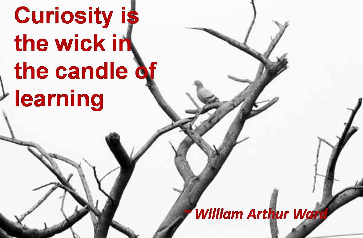 William Arthur Ward- Curiosity is the wick in the candle of learning