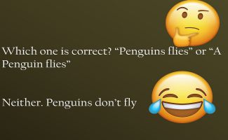Which one is correct Penguins flies or A Penguin flies